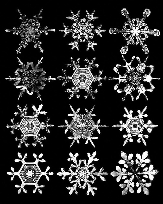 Photo of snow crystals by W.A. Bentley