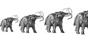 Mammoth Resurrection?
